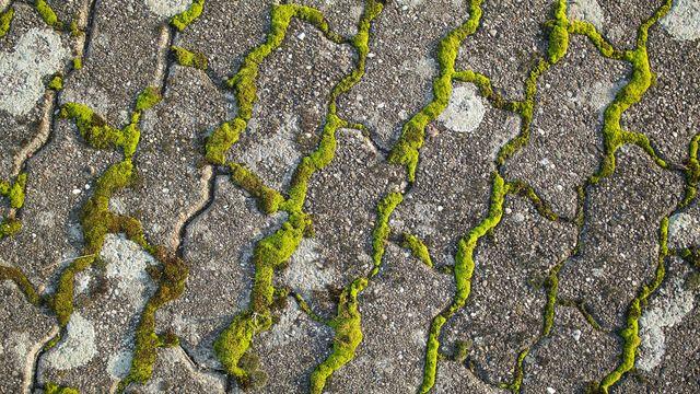 5 solutions pour éliminer la mousse sur une terrasse